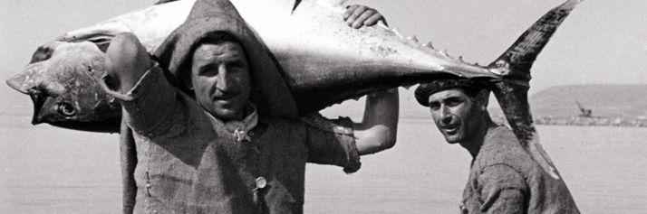Un tonno portato a riva, nella tonnara di Pizzo Calabro