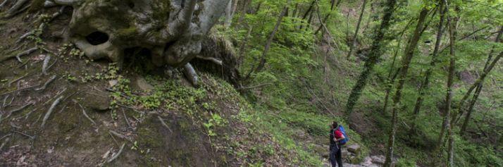 Il Cammino di Dante nella faggeta del Parco Nazionale delle Foreste Casentinesi