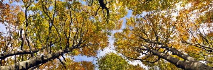 Una foresta di faggi in autunno: la riserva integrale di Sasso Fratino, nel parco delle Foreste Casentinesi