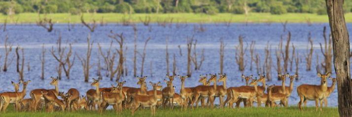 Puku e impala sul lago Itezhi Tezhi